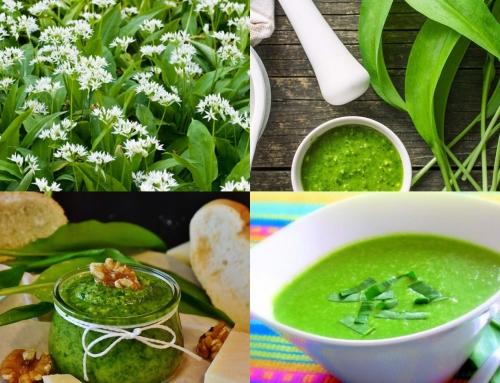 O zdravilnih rastlinah na daljavo